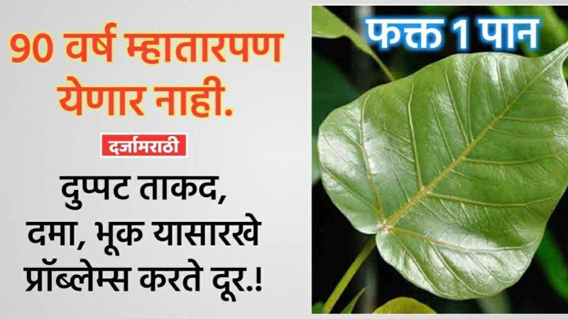 वापरा फक्त या झाडाचे १ पान; ९० वर्ष म्हातारपण अगदी जवळही येऊ देत नाही.!