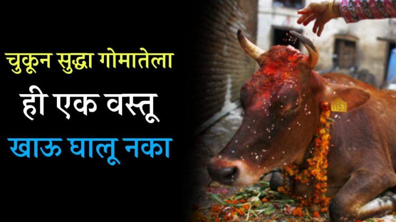 गाईला कधीच चुकून माखून पण या वस्तू खाऊ घालू नका; नाहीतर घरात येते कायमची गरिबी.!