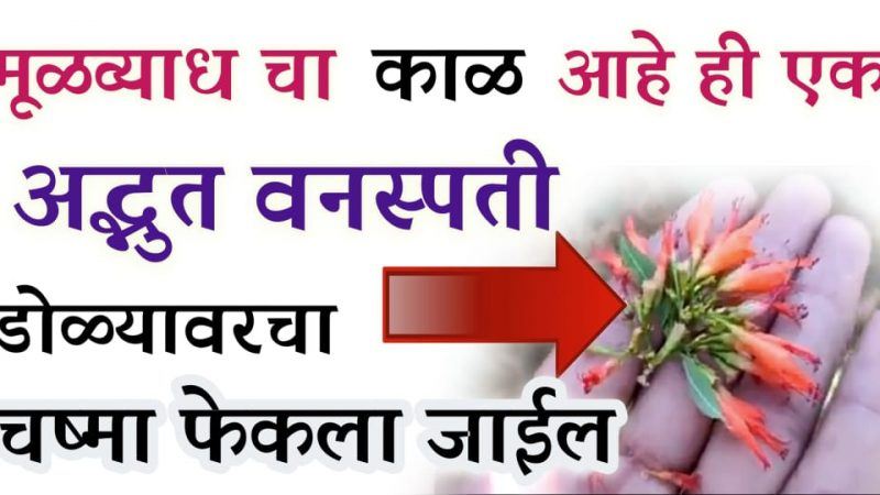 मूळव्याधीचा काळ आहेत ही फुले; अपचन, मूळव्याध यासाठी अशाप्रकारे याचा वापर करा.!